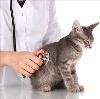 Ветеринарные клиники в Иволгинске